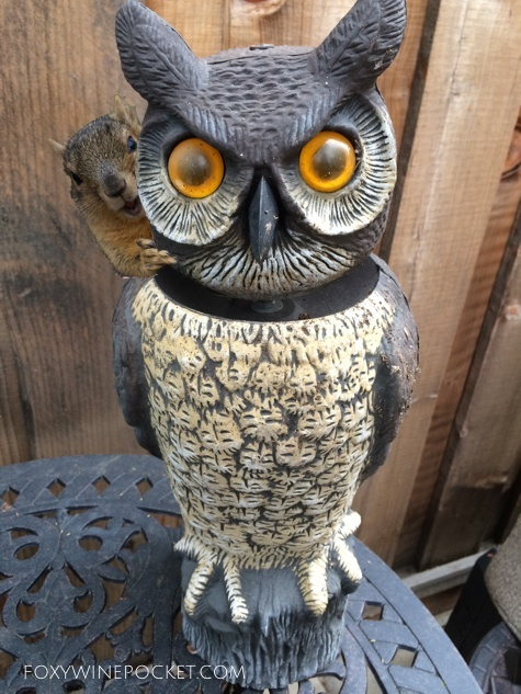This owl isn't fooling anyone. Hell, the squirrels dry hump it daily.