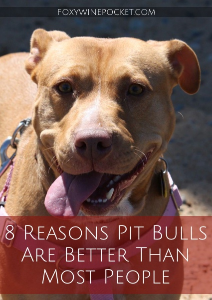 I get some mighty odd glares when walking my pit bull. No matter. I'd rather hang out with a pit bull than most people any day. Here's why. @foxywinepocket