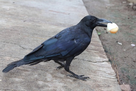 7 Ways to Eat Crow after You Have Kids  @foxywinepocket funny | parenting